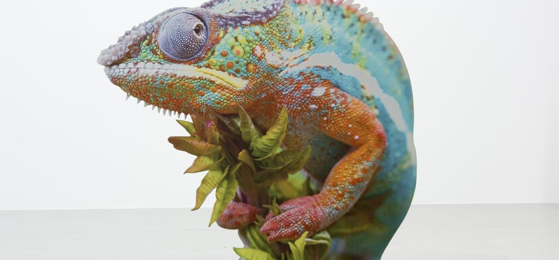 Art et Science : «Le Rêve des Formes» quand Le Fresnoy investit le Palais de Tokyo à Paris jusqu'au 10 septembre 2017