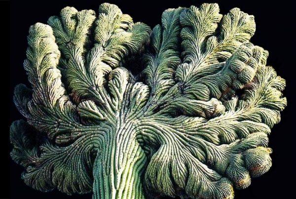 lapparition_du_monstre_cactus_2