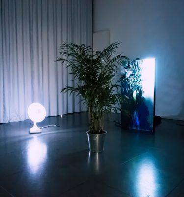 A three way Symbiosis (environment 1)