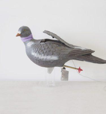 Sans Titre (mon pigeon)