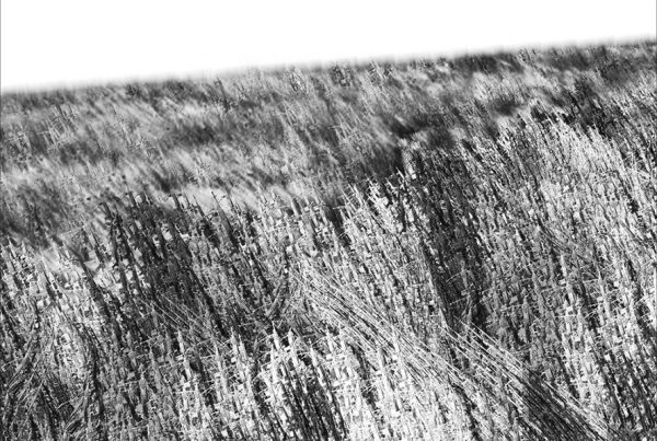 blecrit-de-lhistoire-M14-ebr-2016_VARIATION